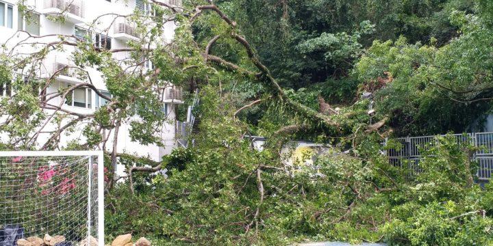 颱風山竹的影響